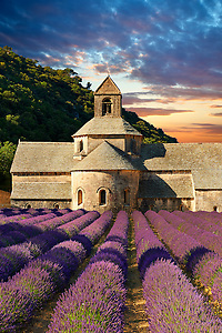 The 12th century Romanesque Cistercian Abbey of Notre Dame of Senanque ( 1148 ) set amongst the flowering lavender fields of Provence near Gordes, France. (Paul E Williams)