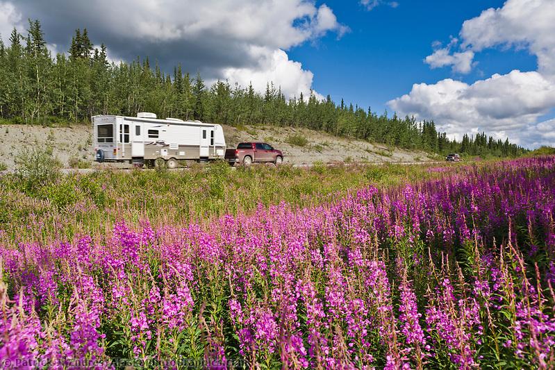 Vehicle travel, fireweed, along the Glenn Highway, southcentral, Alaska. (Patrick J. Endres / AlaskaPhotoGraphics.com)