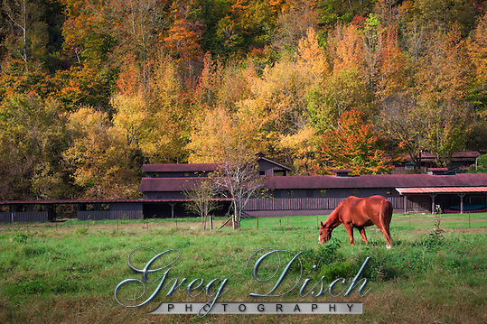 Horse grazing at Steel Creek Campground on the Buffalo National River in Arkansas. (Greg Disch gdisch@gregdisch.com)