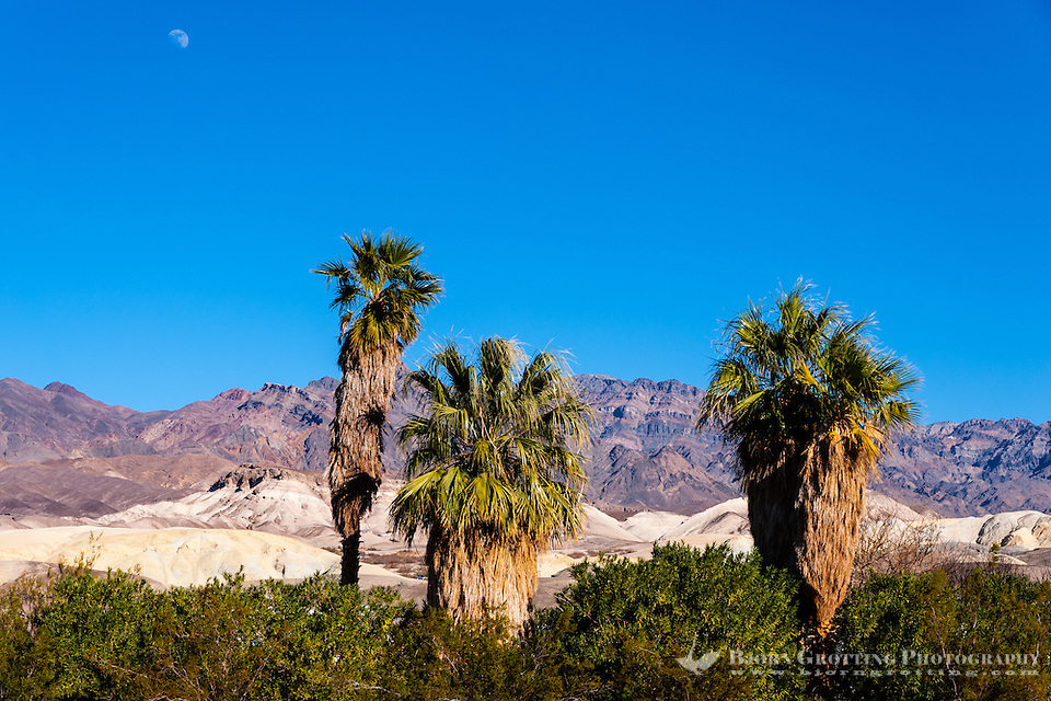 United States, California, Death Valley. Furnace Creek is an oasis in the desert. (Photo Bjorn Grotting)
