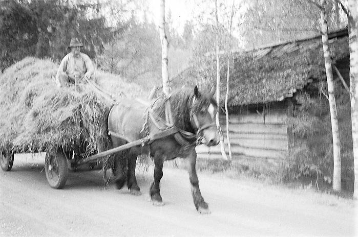 Hölass i Dalarna. (Bernt Lindgren /GRAPHY)