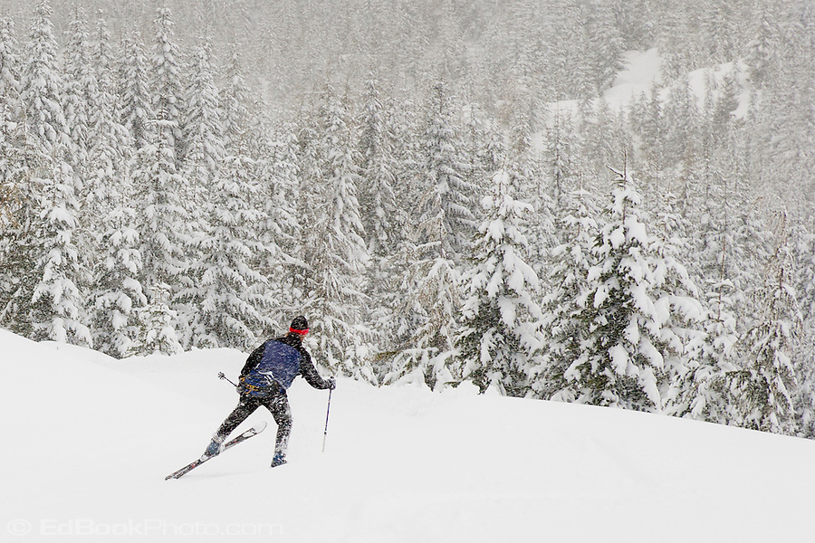 A cross country skier strides into new snow along the Rainier Vista Trail of the Mount Tahoma Trails in the Washington state Cascade Mountain Range near Mount Rainier. USA (Ed Book)