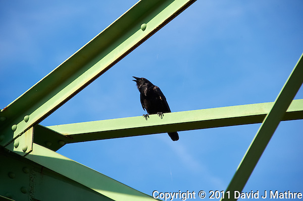 Crow on the Lambertville New Hope Bridge. Image taken with a Nikon D700 and 28-300 mm VR lens (ISO 200, 300 mm, f/8, 1/400 sec). Raw image processed with Capture One Pro 6, Nik Define 2, and Photoshop CS5. (David J Mathre)