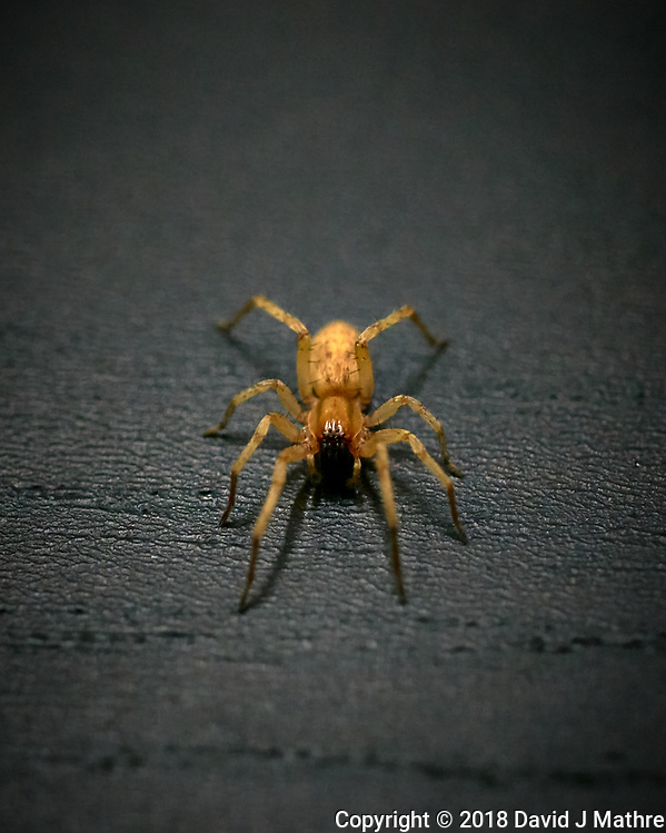 Spider at my Computer Desk. Image taken with a Leica TL2 camera and 60 mm f/2.8 macro lens (David J Mathre)