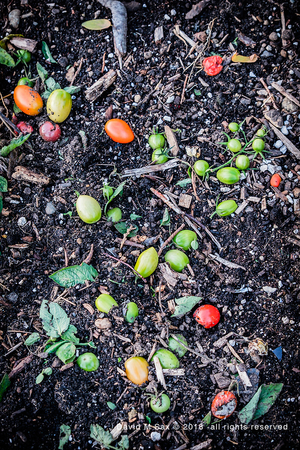 10.10.18 - Fertilizer.... (© David M Sax 2018 - all rights reserved)
