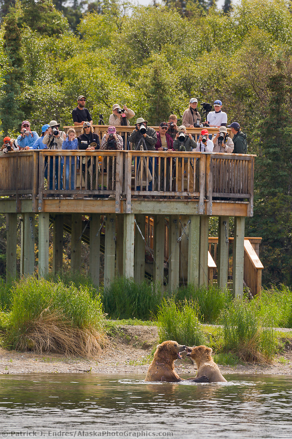Tourists view bears from the viewing platform along the Brooks River, Brooks Lodge, Katmai National Park, Alaska (Patrick J. Endres / AlaskaPhotoGraphics.com)