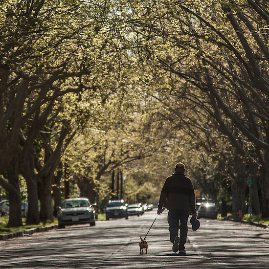 Nicolas with his dog on Cedar Street in Calistoga (Clark James Mishler)