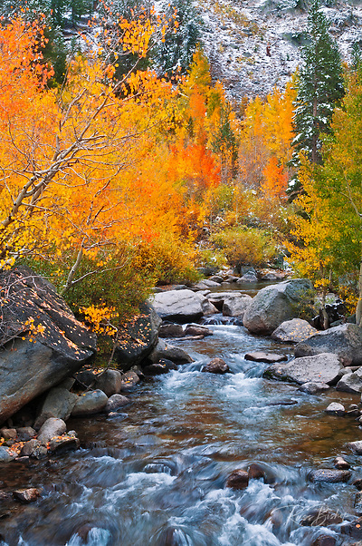 Fall color along Bishop Creek, Inyo National Forest, Sierra Nevada Mountains, California USA (Russ Bishop/Russ Bishop Photography)
