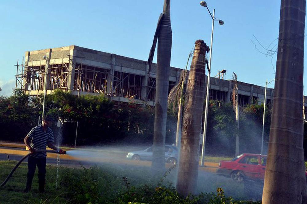 En el pasado la Alcaldía de Santiago invirtió en palmeras que luego murieron y fueron arrancadas.