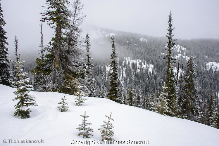 Snow storm moves through Roaring Creek valley in Alpine Lakes Wilderness (G. Thomas Bancroft)