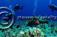 Scuba Diving, Garden Eel Cove, Kona Hawaii (Steven W Smeltzer)