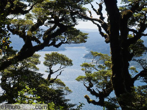 "Trees frame Lake Waikaremoana along the Panekiri Bluff trail in Te Urewera National Park, North Island, New Zealand. Published in ""Light Travel: Photography on the Go"" by Tom Dempsey 2009, 2010. (© Tom Dempsey / PhotoSeek.com)"