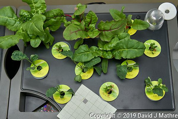 Farm 09 Right (14 days). Positions F09R01 - F09R03, F09R05 Swiss Chard (Botanical Interest); F09R07-F09R10, F09R12 Kale (Botanical Interest) F09R04, F09R06, F09R11 Cilantro. Image taken with a Leica TL-2 camera and 35 mm f/1.4 lens (ISO 320, 35 mm, f/8, 1/80 sec). (DAVID J MATHRE)