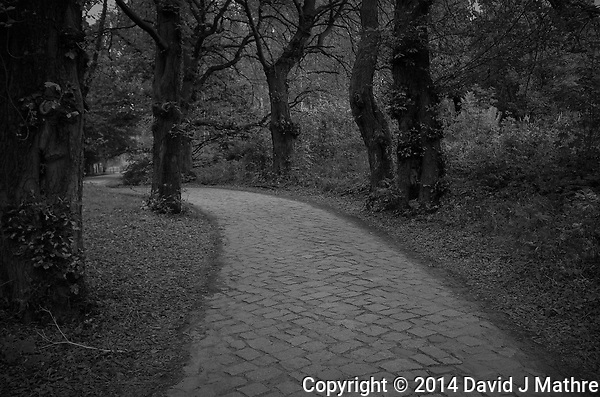 Stone Pathway in a Wooded Park -- Gdansk. Image taken with a Leica X2 camera (ISO 400, 24 mm, f/4, 1/250 sec). In camera B&W image. (David J Mathre)