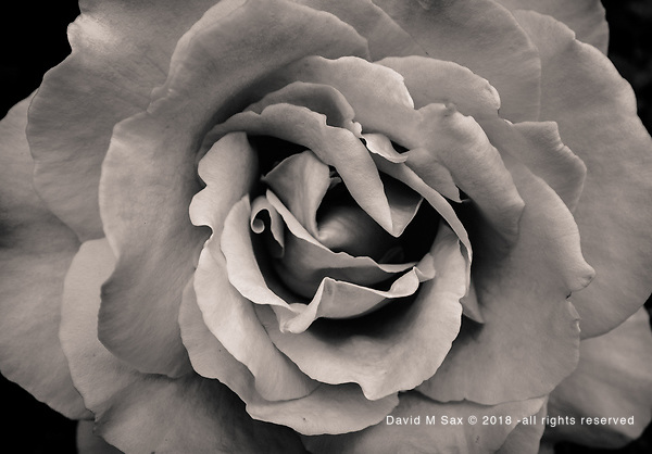 6.12.17 - Arose to The Occasion... (© David M Sax 2017 - all rights reserved)