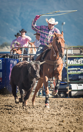 Charlie Willis demonstrates his ropping skills at the Alaska State Fair Rodeo in Palmer, Alaska (Clark James Mishler)