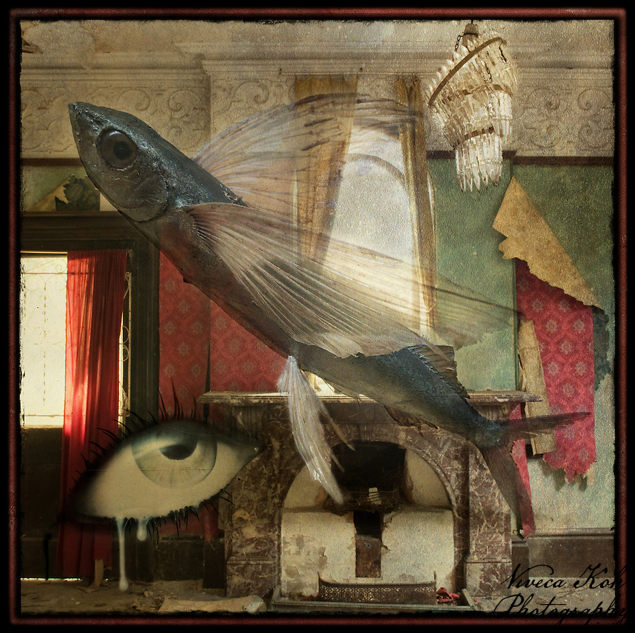 Flying fish and eye in abandoned manor house (Viveca Koh)