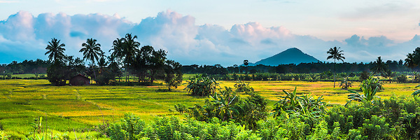 Panoramic photo of a paddy field Sri Lanka landscape near Dambulla, Central Province, Sri Lanka, Asia. This is a panoramic photo of a paddy field Sri Lanka landscape near Dambulla, Central Province (often called the 'cultural triangle'), Sri Lanka, Asia. There are endless opportunities for landscape photography in Sri Lanka, and the paddy fields around Dambulla are easily one of the highlights.