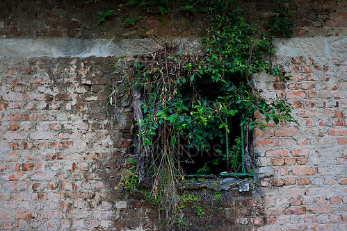 Detail of a cell window in the abandoned prison in Dois Rios on the island of Ilha Grande, Brazil. Photo by Andrew Tobin/Tobinators Ltd (Andrew Tobin/Tobinators)
