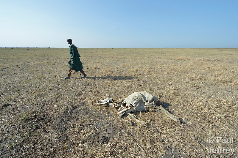 A man walks by a dead cow in Dong Boma, a Dinka village in South Sudan's Jonglei State, on April 12, 2017. Most villagers recently returned home after being displaced by rebel soldiers in December, 2013, and they face serious challenges in rebuilding their village while simultaneously coping with a drought which has devastated their herds. The Lutheran World Federation, a member of the ACT Alliance, is helping villagers restart their lives with support for housing, livelihood, and food security. (Paul Jeffrey)