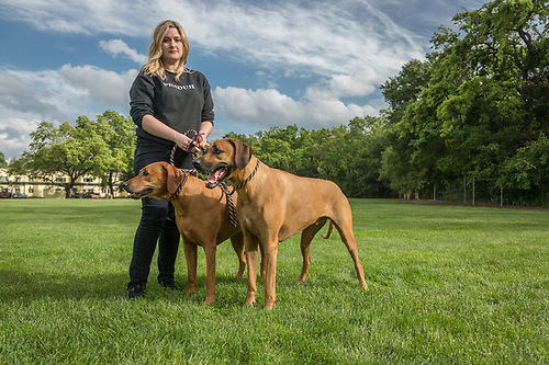 Vancouver resident Genevieve Sparold walks her parent's  Rhodesian Ridgeback dogs, Flash and Sue, at  Logvy Park while visiting Calistoga. (Clark James Mishler)