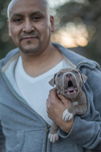 Bartender Alfredo Rayon with his 7 week old puppy, Cato, on South Oak Street in Calistoga. (Clark James Mishler)