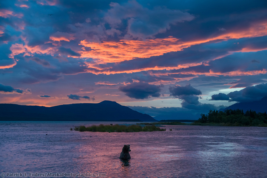 Brown bear wades in the Brooks river, morning sunrise over the Brooks river and Naknek lake, Katmai National Park, Alaska. (Patrick J. Endres / AlaskaPhotoGraphics.com)