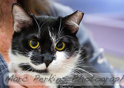 Feral Cat Rescue Orange County Ca