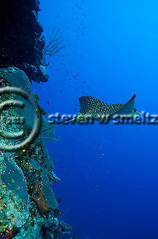 Andes Wall Grand Cayman (Steven W Smeltzer)