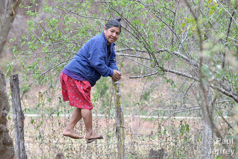 Edulia Vaquera, a Guarani indigenous woman in the village of Kapiguasuti, Bolivia, climbs over a fence to her garden. She and her neighbors started small gardens with assistance from Church World Service, supplementing their corn-based diet with nutritious vegetables and fruits. (Paul Jeffrey)