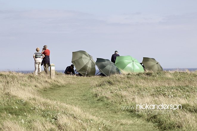 Flamborough Head is a popular spot to observe migrating birds (Nick Anderson)