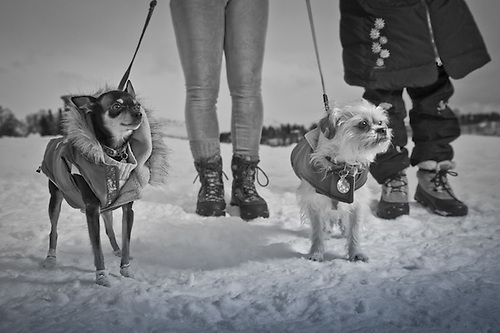 "Lea Jones with ""Cricket"", a four year old Chihuahua/minpinscher and Stacey Scott with ""Bono"", a four year old Chihuahua/shih tzu near Westchester Lagoon, Anchorage (Clark James Mishler)"