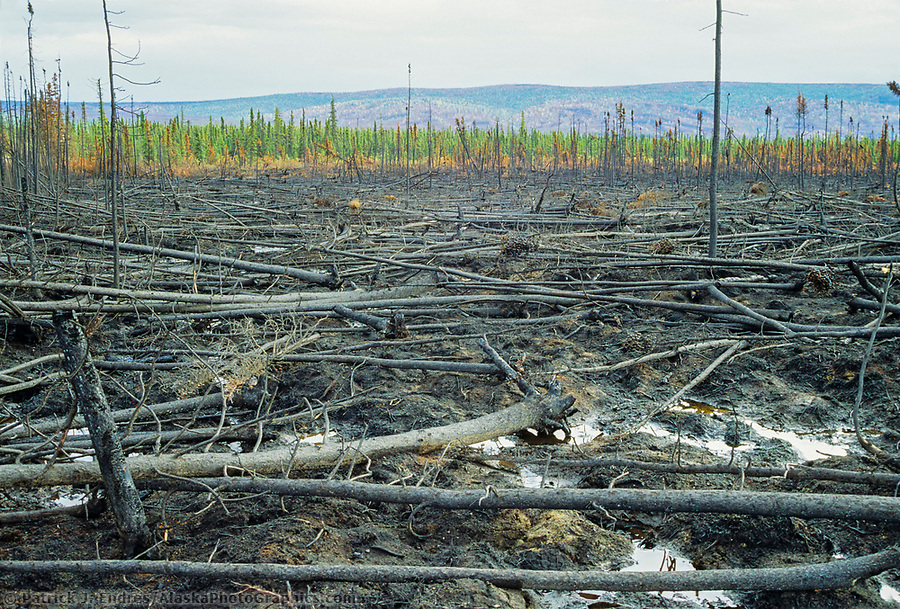 Forest fire burn along the James Dalton highway, Alaska (Patrick J. Endres / AlaskaPhotoGraphics.com)