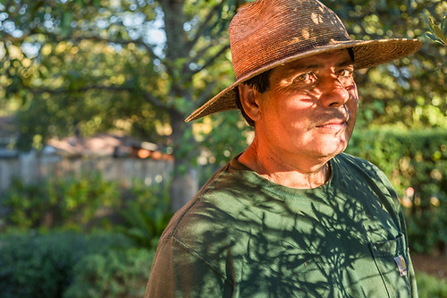 Landscaper Raul Mendoza finishes his week at a home on School Street in Calistoga. (Clark James Mishler)