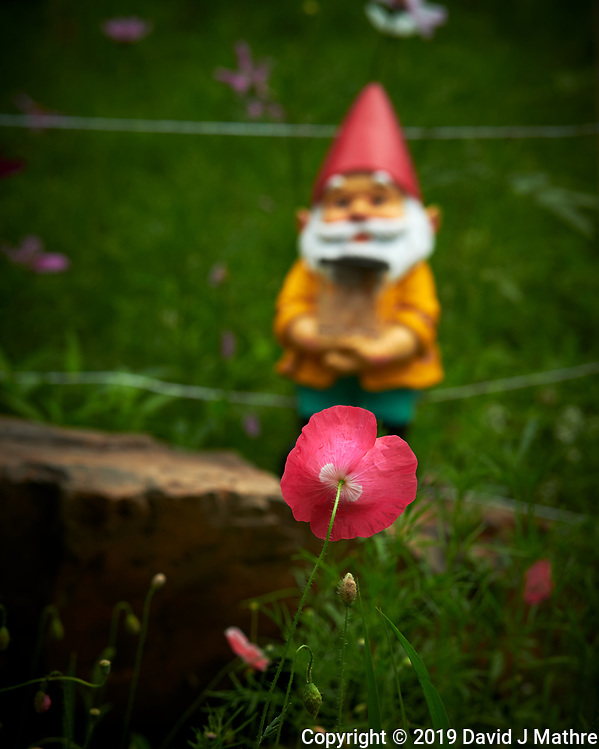 Troll looking at a Poppy Flower. Image taken with a Nikon D850 camera and 105 mm f/1.4 lens (DAVID J MATHRE)