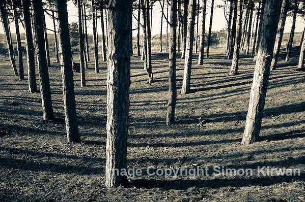 Pinewoods, Formby Point - Photo By Simon Kirwan