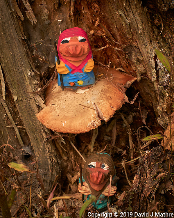 Mushroom Hunting Trolls found a Big One. Image taken with a Leica CL camera and 55-135 mm lens (ISO 320, 135 mm, f/8, 1/250 sec). (DAVID J MATHRE)