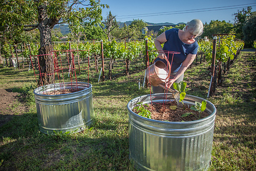 """Deborah Testa waters her new garden in Calistoga  """"We moved here last September...I always wanted a garden but our home in Los Angeles was on a vertical lot and just didn't work for a garden.  So, this is my first time as a gardener...I like my additional elbow room."""" (Clark James Mishler)"""