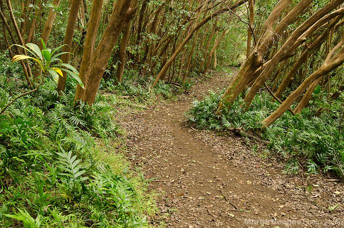 Kuamo'o-Nounou Trail, Kauai, Hawaii (Martin Beebee Photography)