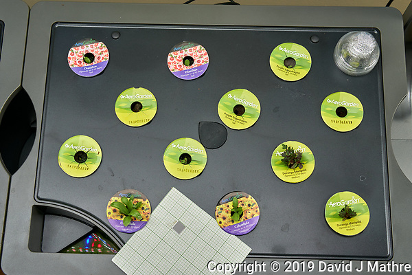 Farm 08 Right (14 days). Edible Flowers (AeroGarden). F08R01, F08R02 Dianthus; F08R03, F08R05 Purple Snapdragon; F08R04, F08R06, F08R07, F08R08 Snapdragon; F0809, F08R12 Durango Marigold; F08R11, F08R11 Calandula. Image taken with a Leica TL-2 camera and 35 mm f/1.4 lens (ISO 400, 35 mm, f/8, 1/80 sec). (DAVID J MATHRE)