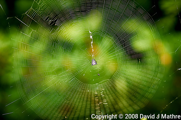 Spider in its Web. Image taken with a Nikon D3 camera and 105 mm f/2.8 macro lens (ISO 200, 105 mm, f/5.6, 1/60 sec) (David J Mathre)