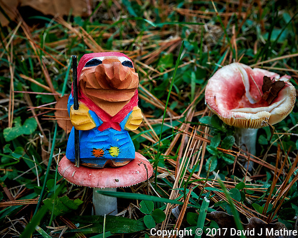 Troll hunting for the elusive red mushrooms. Autumn Backyard Nature in New Jersey. Image taken with a Nikon Df camera and 28 mm f/1.8 lens (ISO 560, 28 mm, f/8, 1/30 sec). (David J Mathre)