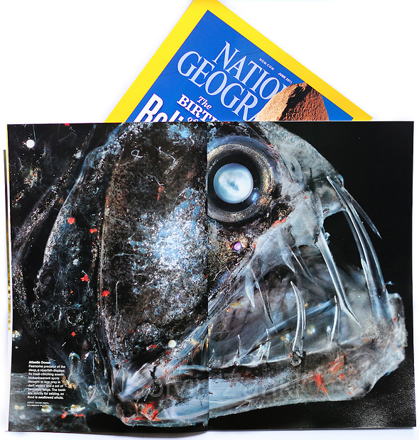National Geographic magazine (June 2011) publishes Solvin's Deep Sea Viperfish photo in Visions of Earth. (Solvin Zankl)