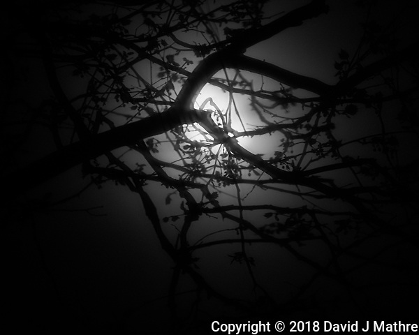 Moonlight Through Fog. Image taken with a Fuji X-T2 camera and 100-400 mm OIS telephoto zoom lens (David J Mathre)