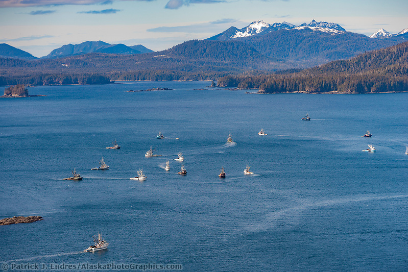 Sitka photos: Commercial fishing vessels, Cape purse seiners position themselves in Sitka Sound, on the north side of Middle Island, for the first Herring Sac Roe fishery opener in 2006, southeast, Alaska (Patrick J. Endres / AlaskaPhotoGraphics.com)