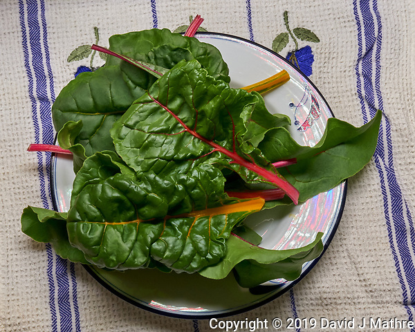First Harvest of Swiss Chard at 28 days. Image taken with a Leica TL-2 camera and 35 mm f/1.4 lens (ISO 800, 35 mm, f/16, 1/25 sec). (DAVID J MATHRE)