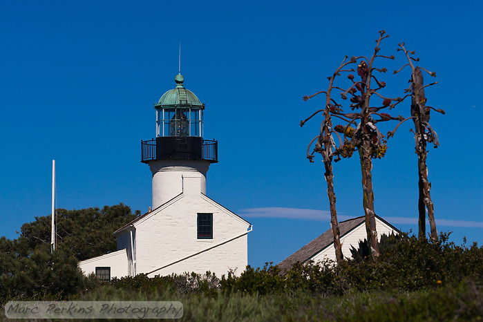 Old Point Loma Light standing proud, seen end-on from the south on a sunny winter day.  The light is in Cabrillo National Monument near San Diego, CA.  Framing the lighthouse are three withered agave inflorescences along with fields of green bushes and trees.  The assistant keeper's quarters are visible as a separate white building behind the inflorescences. (Marc C. Perkins)