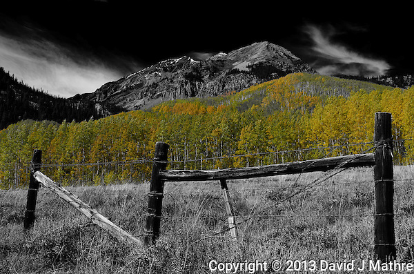 Fall Aspens near Ashcroft (David J Mathre)