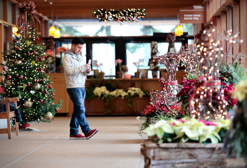 "Iowa State University fourth year student Rafael Miranda of Carmel. Ind., stops to photograph the holiday decor at Reiman Gardens during a break from finals on Monday, December 14, 2015. ""It's nice to just visit and look at the pretty decorations,"" Miranda said of the finals week de-stresser. (Photo by Christopher Gannon/Iowa State University) (Christopher Gannon)"