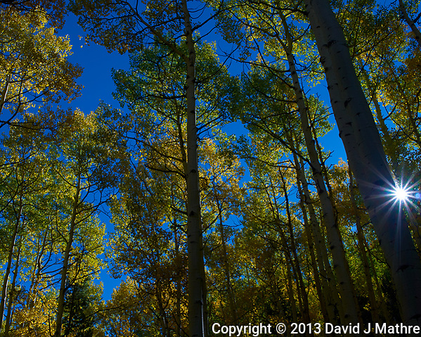 Autumn Aspen Forest with a Sunburt. Image taken with a Leica X2 camera (ISO 100, 24 mm, f/16, 1/125 sec). (David J Mathre)